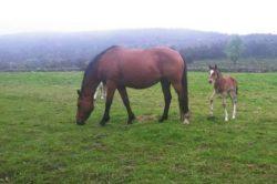 La Guardia Civil investiga la sustracción de dos equinos en el Valle de Valdebezana