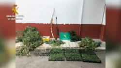 """La Guardia Civil desmantela una plantación """"indoor"""" con 1.394 plantas de marihuana tras el incendio en la vivienda"""