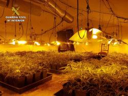 """La Guardia Civil desmantela una plantación """"indoor"""" de marihuana con 368 plantas vivas"""