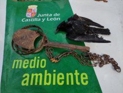 La Junta de Castilla y León localiza y denuncia a una persona por colocar un cepo en el campo