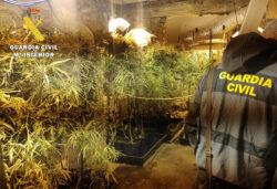 """La Guardia Civil desmantela una plantación """"indoor"""" de marihuana con 154 plantas en el Valle de Mena"""