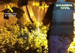 """La Guardia Civil desmantela una plantación """"indoor"""" de marihuana en Las Merindades con 85 plantas"""
